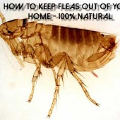 100% Natural Flea Killer For The Home And Garden