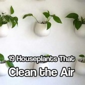 19 Houseplants That Clean the Air - Why invest in expensive electrical air purifiers when you could purchase a few types of houseplants to clean and filter the air naturally and inexpensively? I do this and love the quality of air I breath everyday!