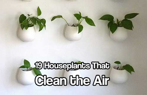 Why Use Plants To Clean Air Naturally