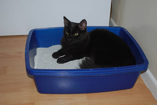 how to make your own cat food cheap