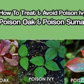 How To Treat & Avoid Poison Ivy, Poison Oak & Poison Sumac - If you're in the 70 percent or so of the population who is sensitive to this oil — a colorless, odorless resin called urushiol — you may know well the end result: an itchy rash with oozing blisters.