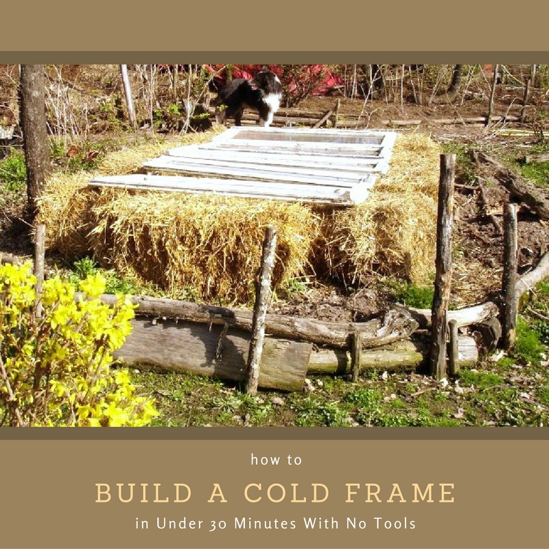 How to Build a Cold Frame in Under 30 Minutes With No Tools - If you want to save money by growing food over the long winter months this is a really easy way to build cold frames with no tools... Straw bales + old windows = instant cold frame!
