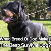 What Breed Of Dog Makes The Best Survival Dog?
