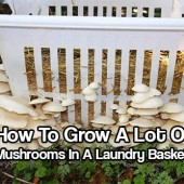 Growing Mushrooms In A Laundry Basket - great way to grow mushrooms outdoors if you have a shady place that gets watered regularly… Great for an emergency food source or just save money at the grocery store.