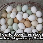 How To Store Fresh Eggs Without Refrigeration Up 9 Months