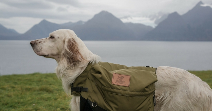 Sew Your Own Dog Pack — If none of the commercially available dog packs strikes your fancy (or if they're too expensive), try putting together your own using the pattern and directions provided below.