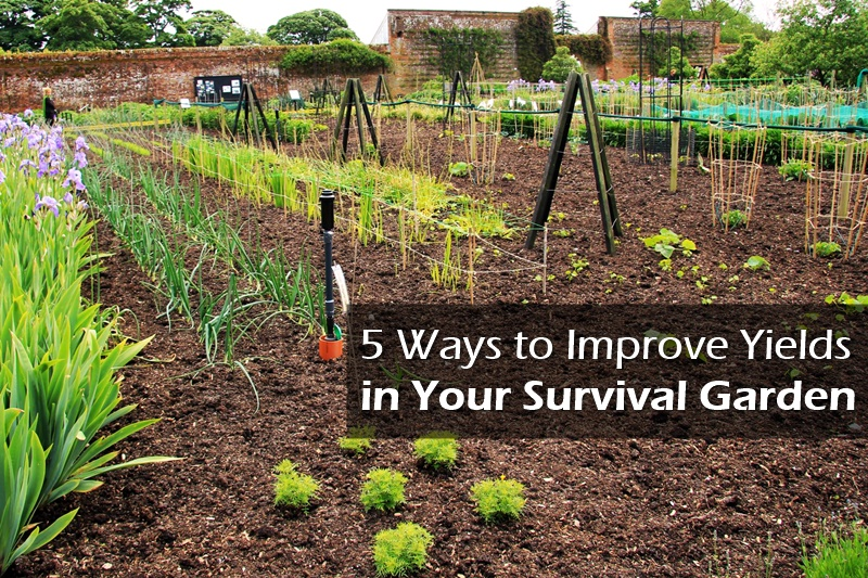 5 Ways To Improve Yields In Your Survival Garden Shtf