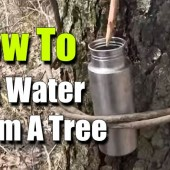How To Get Water From A Tree - Survival