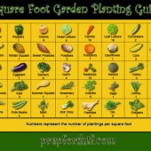 Sqaure_Foot_Planting_GuideSM