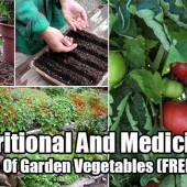 Nutritional And Medicinal Value Of Garden Vegetables - You can grow it, but do you know just how good it is for you? The chart shows you vegetable nutrition chart, a compilation of vitamins, minerals and medicinal benefits of garden vegetables. Check out the chart and print it out for safe keeping.