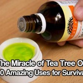 The Miracle of Tea Tree Oil: 80 Amazing Uses for Survival