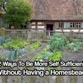 12 Ways To Be More Self Sufficient Without Having a Homestead