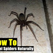 how to keep spiders out of your home naturally