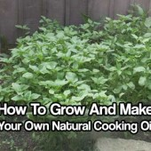 How To Grow And Make Your Own Cooking Oil