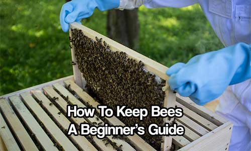 How To Keep Bees A Beginner S Guide Shtf Amp Prepping Central