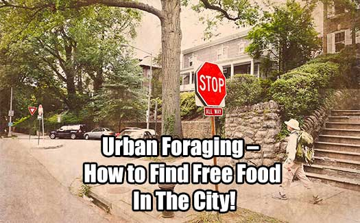 Urban Foraging – How to Find Free Food in the City!