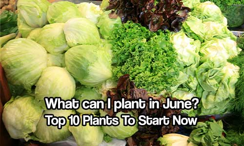What can I plant in June