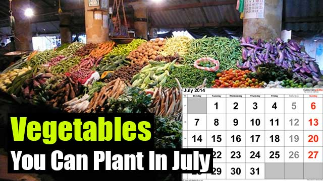 Vegetables You Can Plant In July