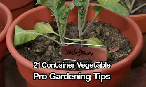 21 Container Vegetable Gardening Tips - If you've chosen to try your hand at container vegetable gardening, there are a few things to consider that normally don't apply to ordinary gardening projects.