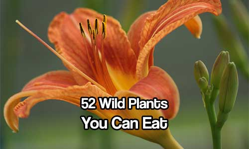 52 Wild Plants You Can Eat - Check out these wild edibles that are safe to eat if you find yourself stuck in the wild or just want to live a more self sufficient lifestyle.