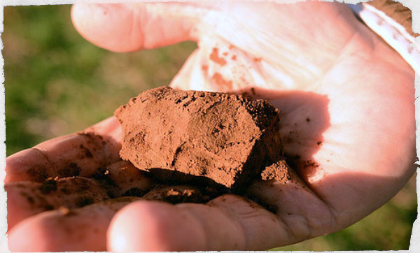 How To Fix Clay or Sandy Soils - In a SHTF situation we will only have our own garden, if we are lucky, so know how to fix your soil before it's to late!
