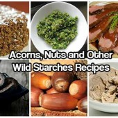 Acorns, Nuts and Other Wild Starches Recipes
