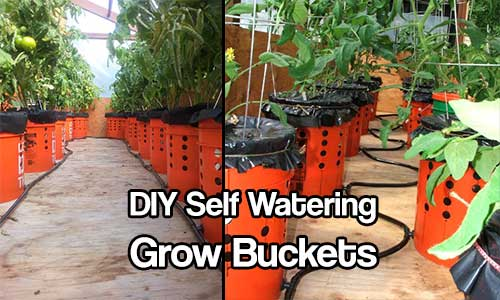 DIY Self Watering Alaska Grow Buckets - The Alaska Grow Bucket is the easiest self-watering container system that anyone can use to grow their own food. Alaska Grow Buckets use capillary action of a soilless grow-medium to draw water from below up to the plant roots.