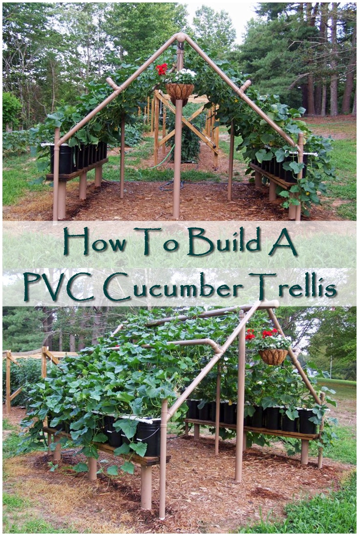 How to build a pvc cucumber trellis shtf prepping for How to make house green