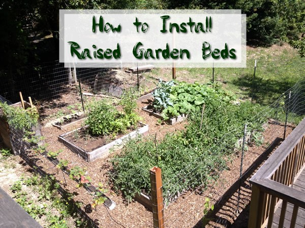 How to Install Raised Garden Beds - A raised bed is well-suited to novices picking up a shovel for the first time. This is actually how I started my garden way back in the day and loved every second of building and maintaining them over the years.