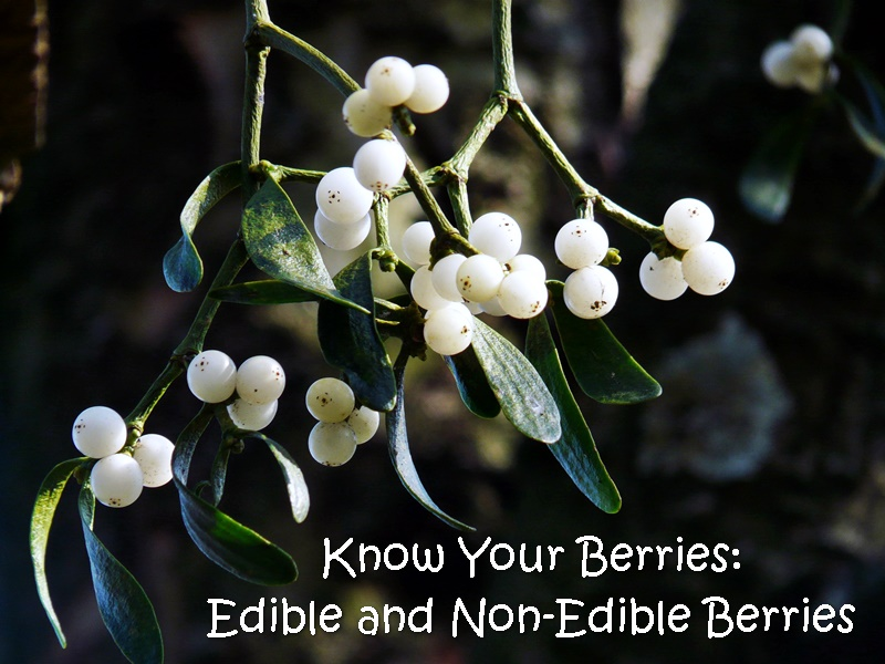 Know Your Berries Edible And Non Edible Berries Shtf