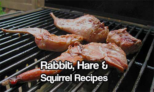 Rabbit, Hare and Squirrel Recipes