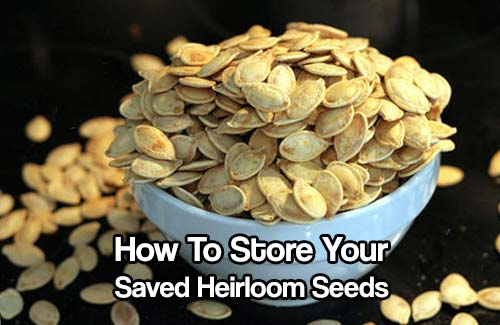 How To Store Your Saved Heirloom Seeds