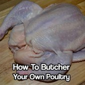 How to Butcher Your Own Poultry - To survive a SHTF situation you may just have to do this, so learn how to now. Check out is the most popular chicken butchering web site on the internet.