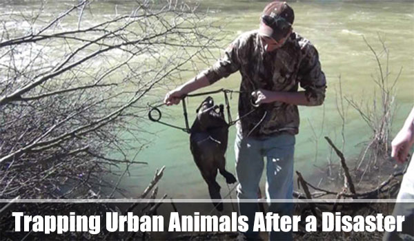 Trapping Urban Animals After a Disaster - Setting a trap or snare is a good way to catch game if you have no weapons. A trap is also valuable in situations where you do have a gun or air rifle, but the sound of shooting off a weapon must be avoided.