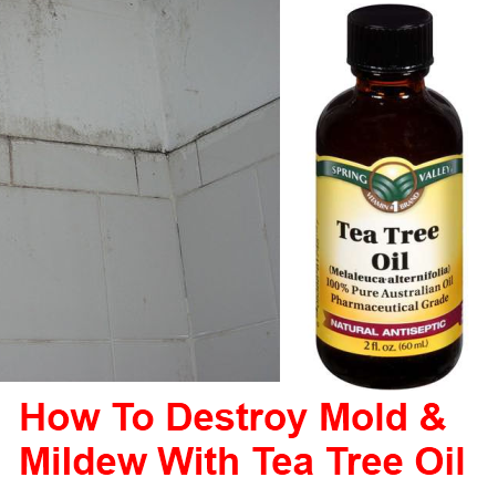 Remove mold mildew naturally with tea tree oil shtf prepping central - Natural ways remove mold ...