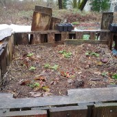 6 Main Reasons Compost Piles Fail, and What to do