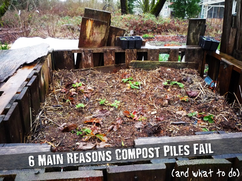 6 Main Reasons Compost Piles Fail (and what to do) - What follows is a reality check about composting. See these common reasons why compost piles fail to produce the black gold you're striving for, and what you can do to fix your compost problem.