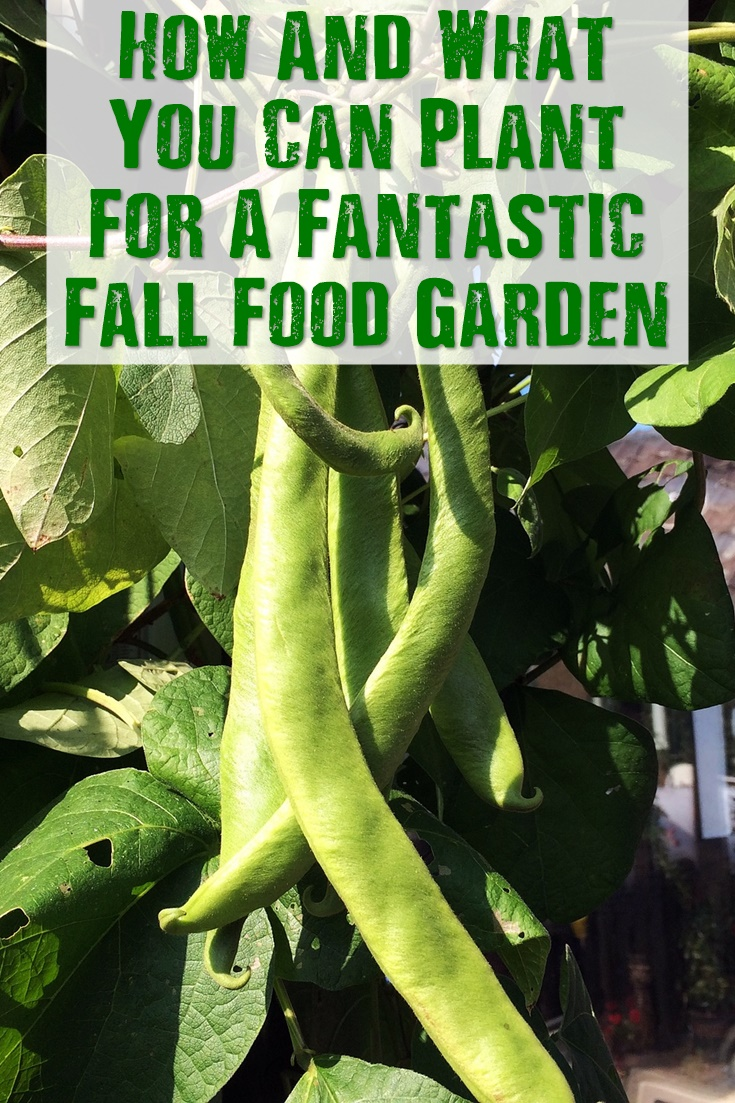 How And What You Can Plant For A Fantastic Fall Food Garden - Did you miss spring and summer planting? Luckily, you can have a great fall garden if you plant now in late summer. You will be surprised what you can grow for a great fall bumper crop. Plant before it's too late!