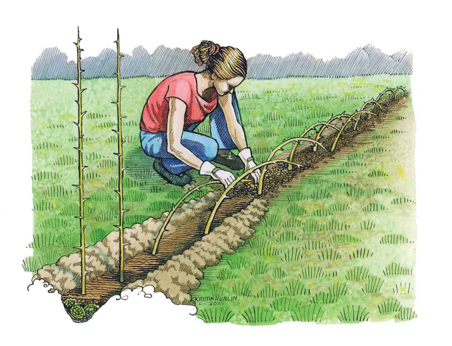 Diy Living Fences How To Advantages And Tips Shtf