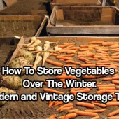 How to Store Vegetables Over the Winter - Modern and Vintage Storage Tips