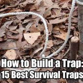 How to Build a Trap: 15 Best Survival Traps