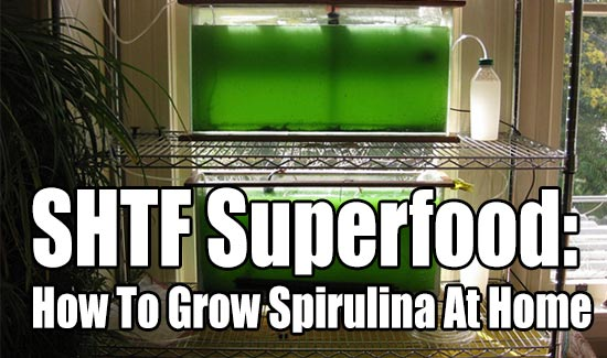 SHTF Superfood: How To Grow Spirulina At Home