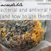 20 Antibacterial and Antiviral Herbs and How to Use Them - Using herbal remedies is easy and if you're looking for herbs to prevent or treat bacterial and viral infections, this list can help you decide what's best for your situation.