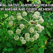 Natural Native American Treatments For Anemia And Other Ailments