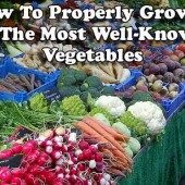 How To Properly Grow 9 Of The Most Well-Known Vegetables