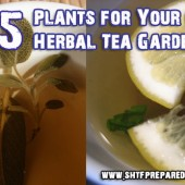 15 Plants for Your Own Herbal Tea Garden