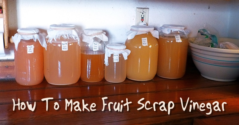 How To Make Fruit Scrap Vinegar - Vinegar can be used in everyday life, from cleaners to food cooking. This is a great way to use all of your fruit scraps like peels, bruised fruits and cores.