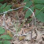 Survival Skills: How to De-Scent Traps