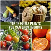 Top 16 Edible Plants You Can Grow Indoors - Take advantage of your indoor space all year round with these 16 edible plants. Do you grow any of these?