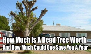 How Much Is A Dead Tree Worth And How Much Could One Save You A Year